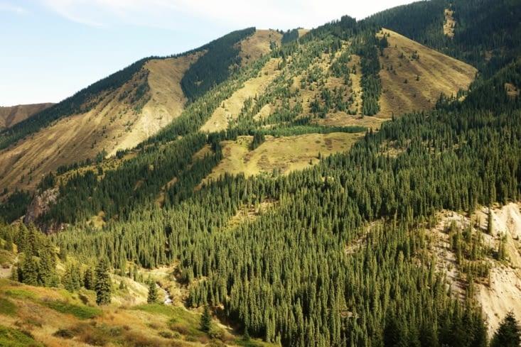 Forêt sur les collines / Forest on the hills