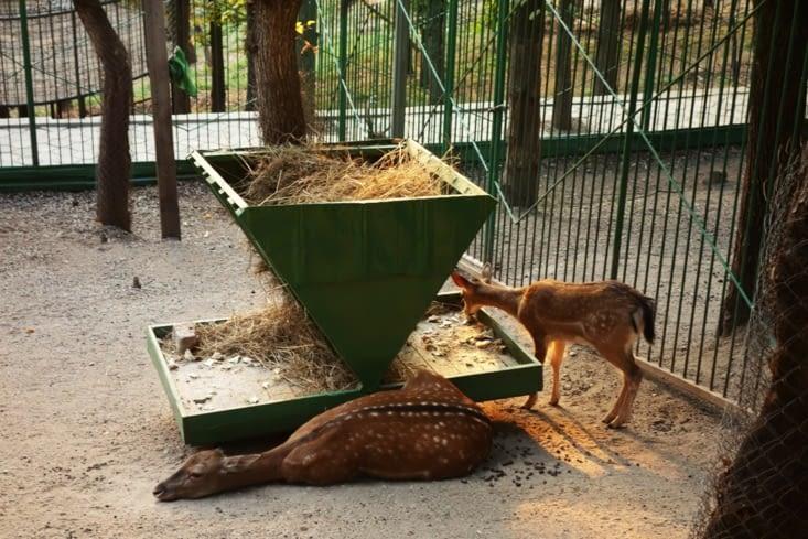 Biche dans le zoo d'Almaty / Deer in Almaty zoo