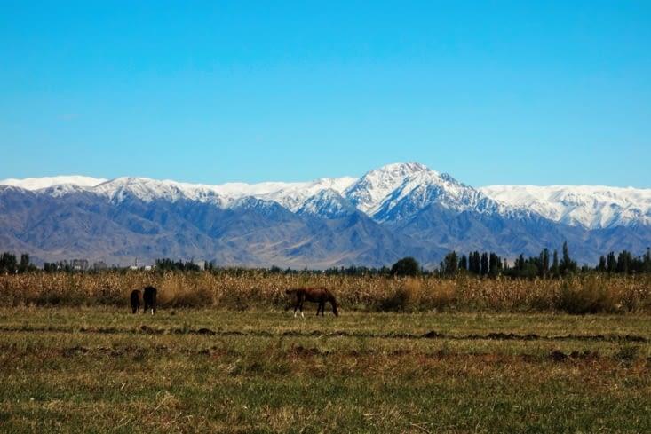 Les chevaux semblent indifférents à la beauté du lieu / Horses seem indifferent to the place's beauty