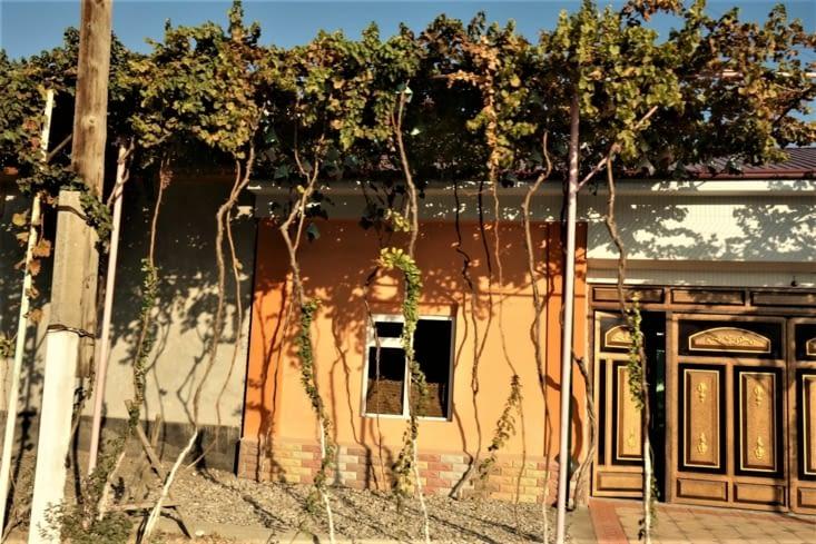 Des vignes / Vines