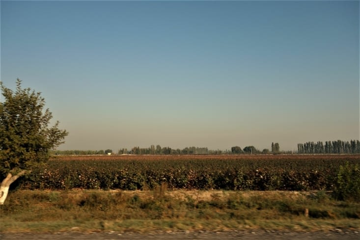 Sur le chemin vers Richton / On the way to Richton