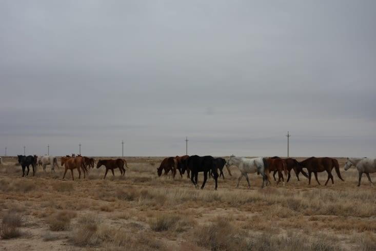Troupeau de chevaux / Horses herd