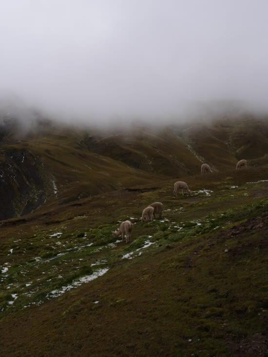 Un épais brouillard recouvre la vallée
