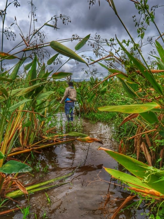 À la recherche de l'anaconda