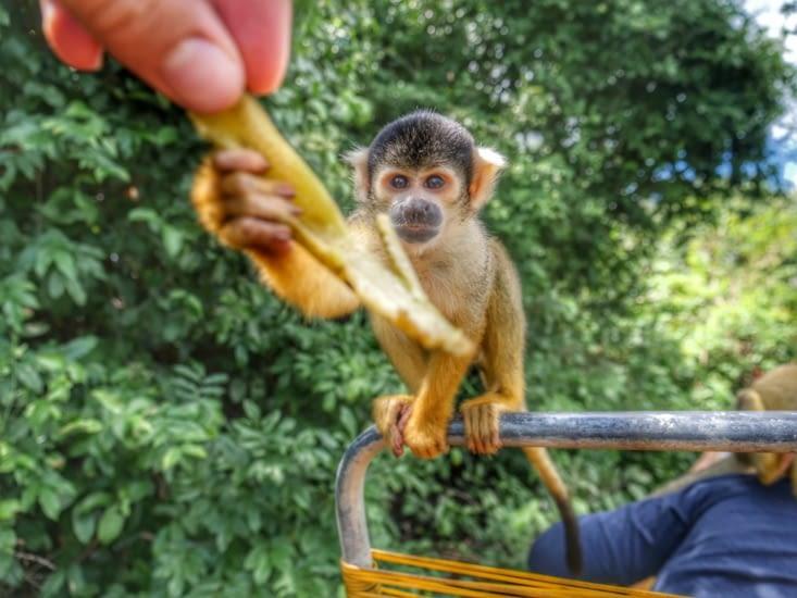 Se battre pour une banane