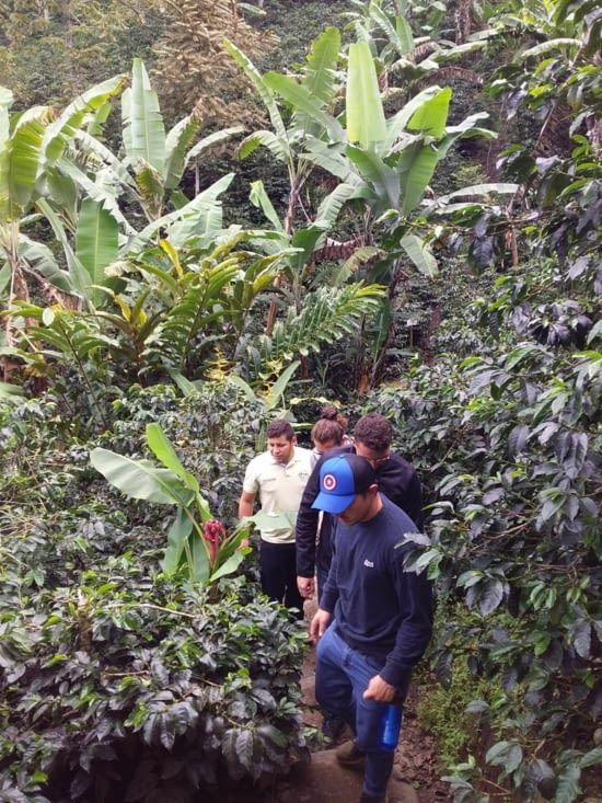 walking the coffee plantation