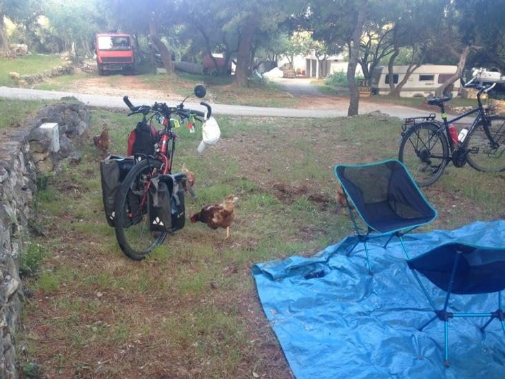 Des poules et un coq, pas commun dans un camping 3 étoiles !