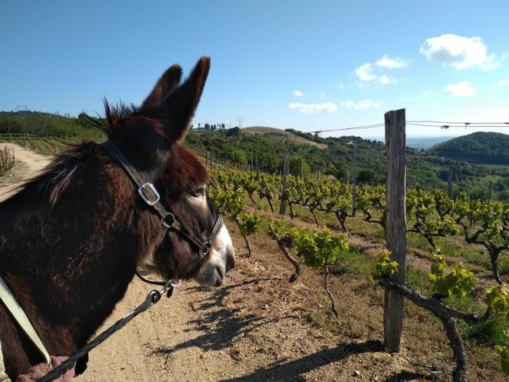 Toujours de la vigne, je préfère la luzerne, moi.