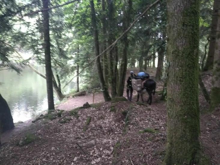 De superbes forêts en bord de rivière