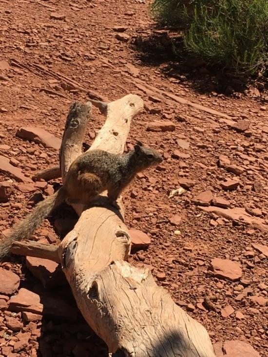 Les petits écureuils viennent chercher à manger