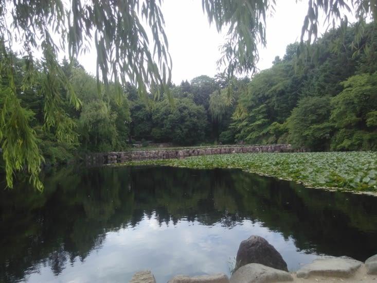 Le petit lac du campus
