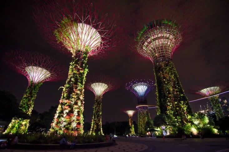 Les supertrees éclairés en soirée
