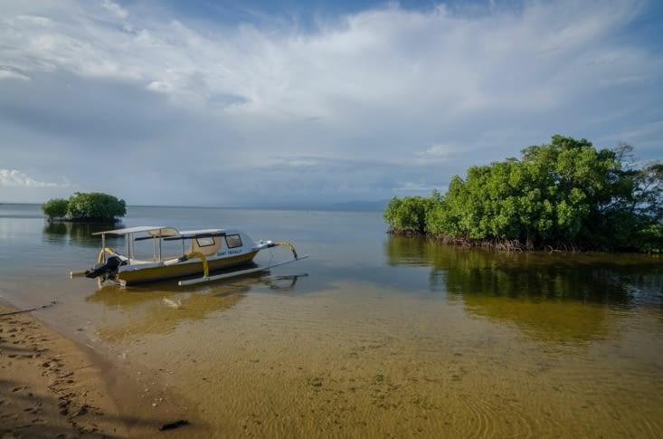 Au bord de la Mangrove
