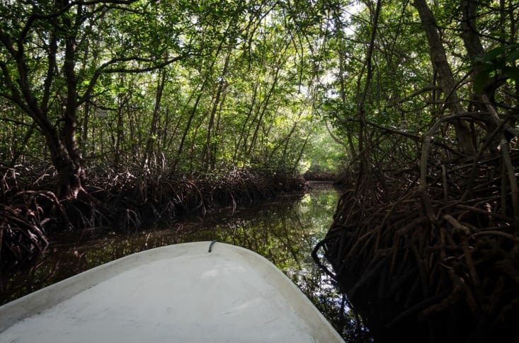 Balade dans la mangrove