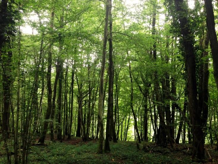 Ardennes Belges : balade dans la forêt de Membre