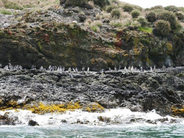 Les pingouins ^^