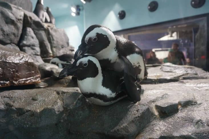 Monterey Aquarium Bay