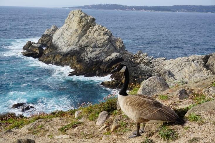 Point Lobos National Park