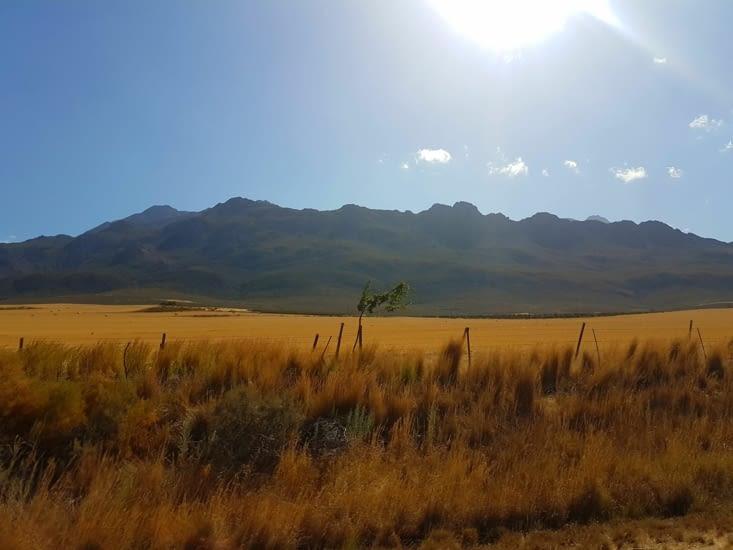 Les blés et la montagne au loin