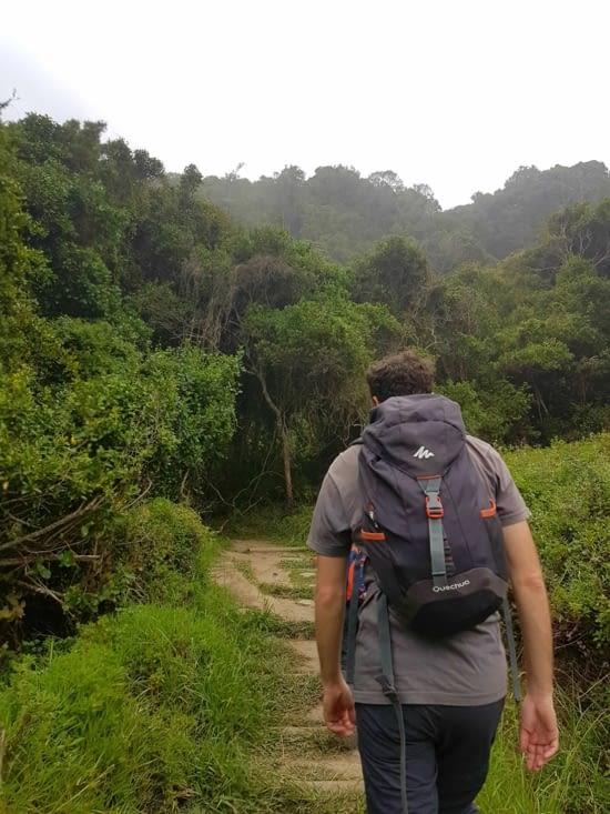 La jungle longe le littoral