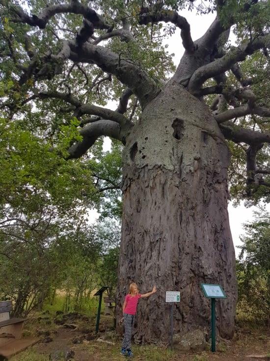 Gabrielle voulait voir des baobabs.