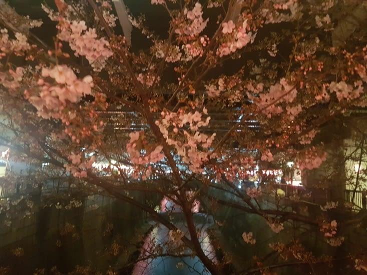 Dernier coup d'oeil aux cerisiers avant notre départ