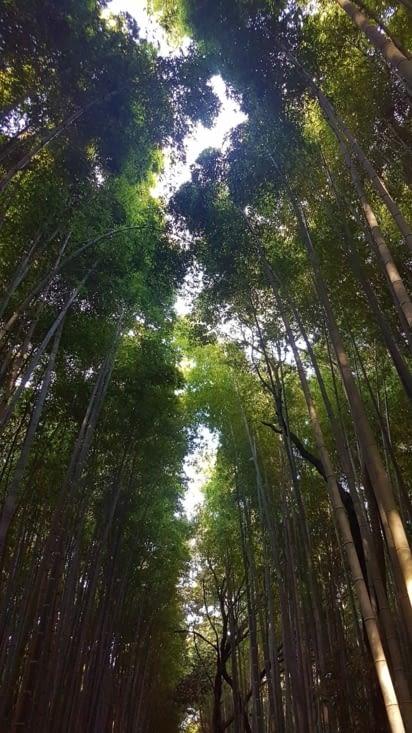 la forêt de bambous et ses environs