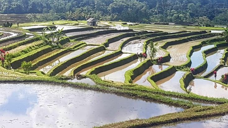 Jatiluwih : les plus belles rizières