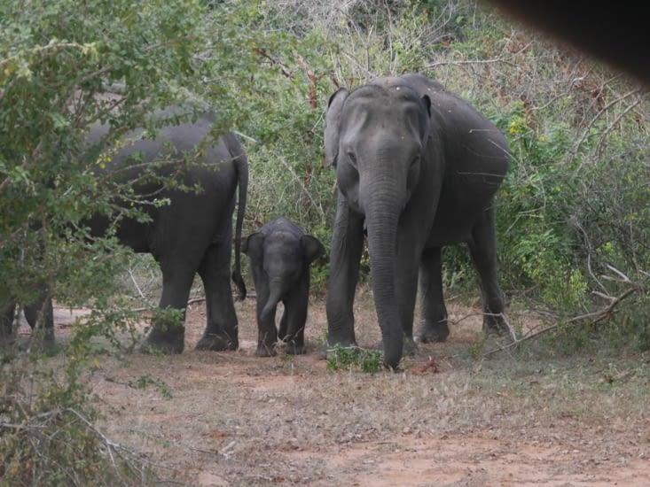 Une famille d'éléphants...