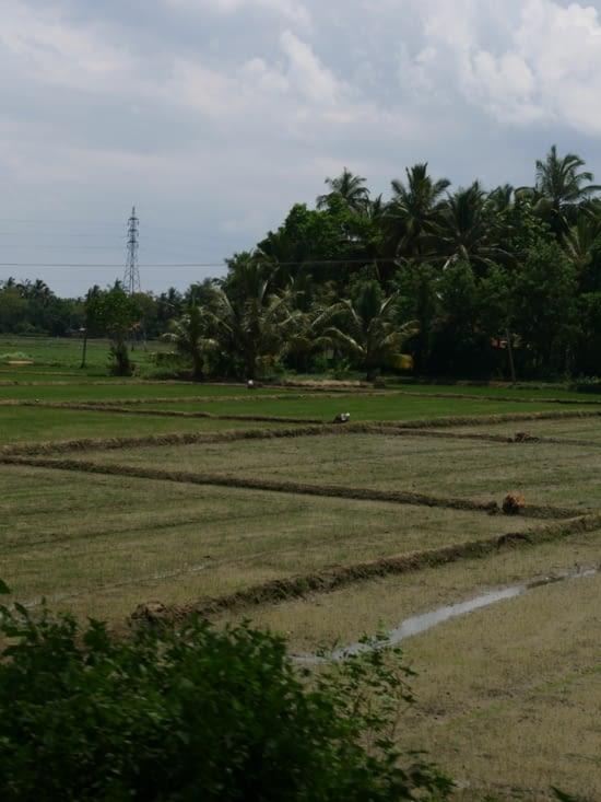 Les rizières sur le chemin du retour