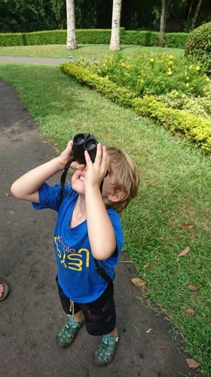 Observation de chauves souris