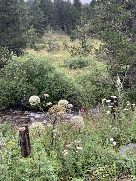 Camping au bord d'une petite riviere