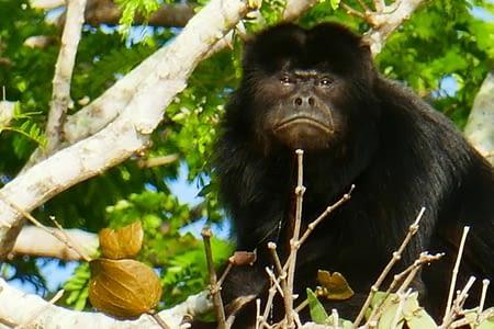11/06 - BRAZILLLLLLLLL - découverte du Pantanal
