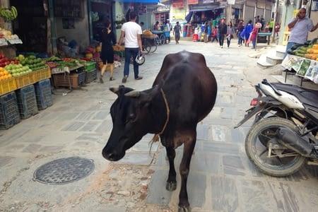 De Katmandou à Bodnath