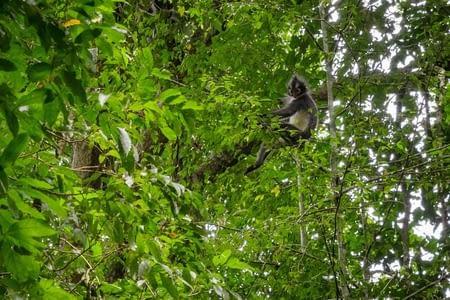 Ketambe, ou l'immersion dans la jungle de Sumatra