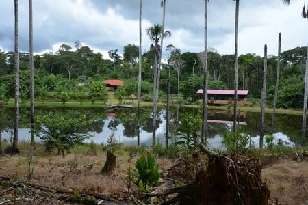 Immersion dans la forêt Amazonienne