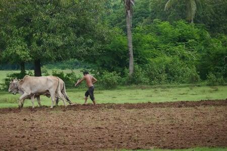 Sur l'Ile de Koh Trong