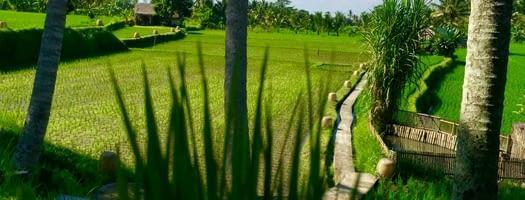 Petit arrêt sur Ubud